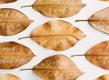 seating hojas secas